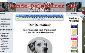Dalmatiner Foto